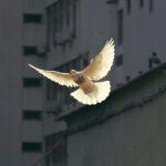 keb-ludwigsburg-akademie-zivile-konfliktbearbeitung